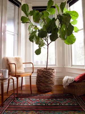 Inspiración para la casa: Plantas grandes bajo techo