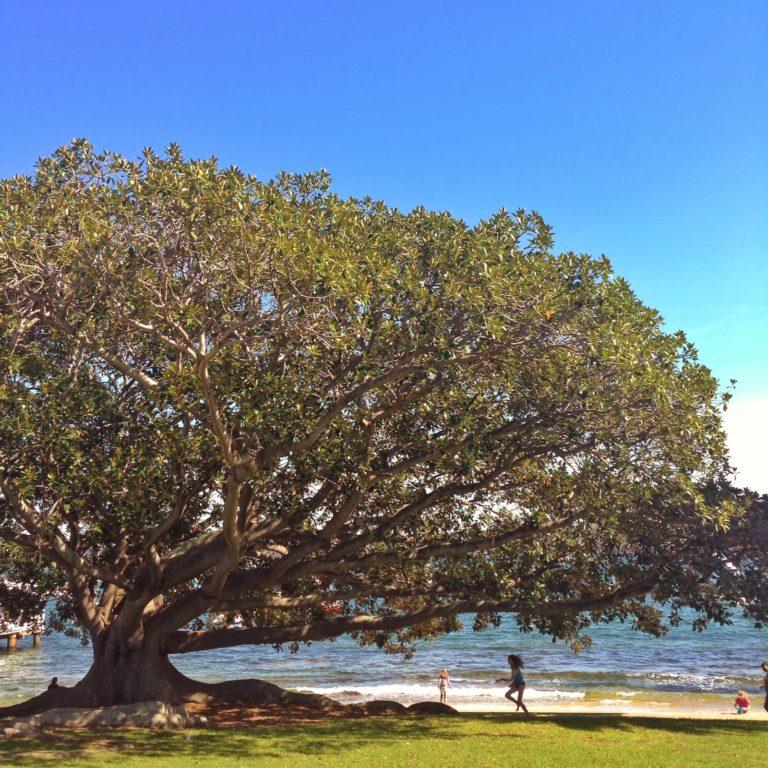 Watsons Bay – Australia