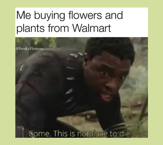Meme de plantas