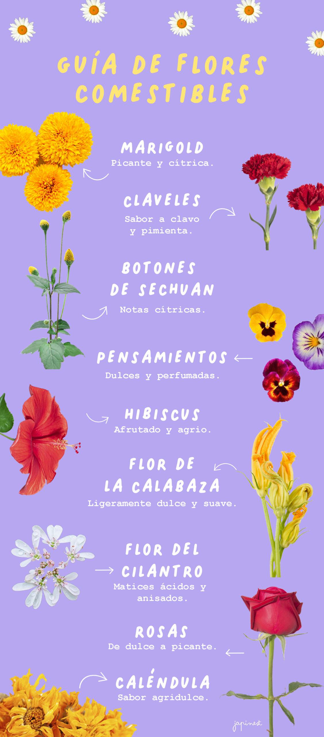 Cuales Flores son Comestibles